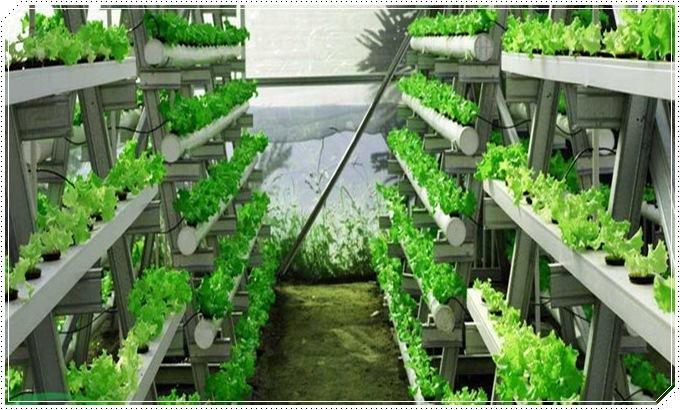 pengertian tanaman hidroponik