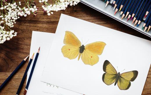 Auf einem weißen Blatt Papier sind zwei Schmetterlinge gezeichnet. Neben dem Blatt liegen drei Bleistifte und über dem Blatt liegen Buntstifte. Seitlich wird das Bild von kleinen weißen Blumen gesäumt.
