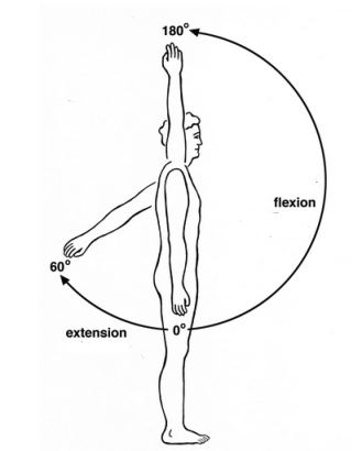 Shoulder flexion and extension