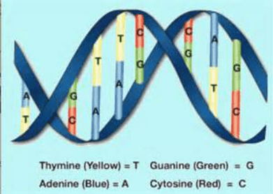dna sequence genetic code