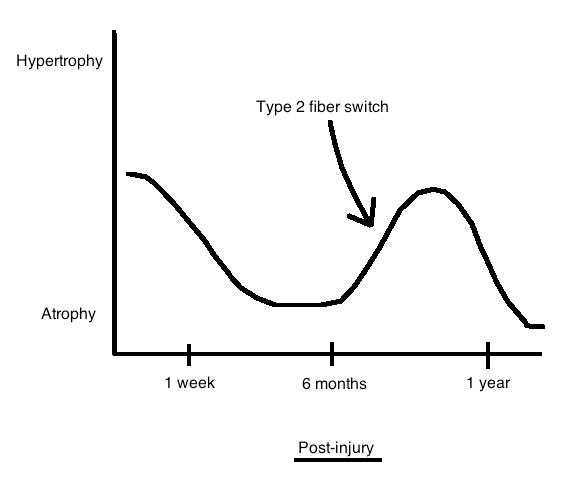 Pain timeline atrophy hypertrophy graph