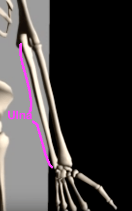 Ulna forearm neutral