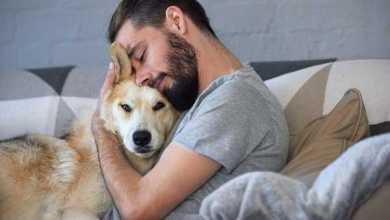 Photo of עסוקים מדי בשביל לטפל בכלב שלכם? יש מי שיעשה את זה בשבילכם