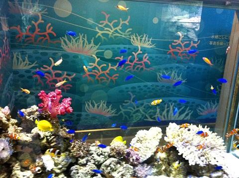 姫路市立水族館 熱帯魚