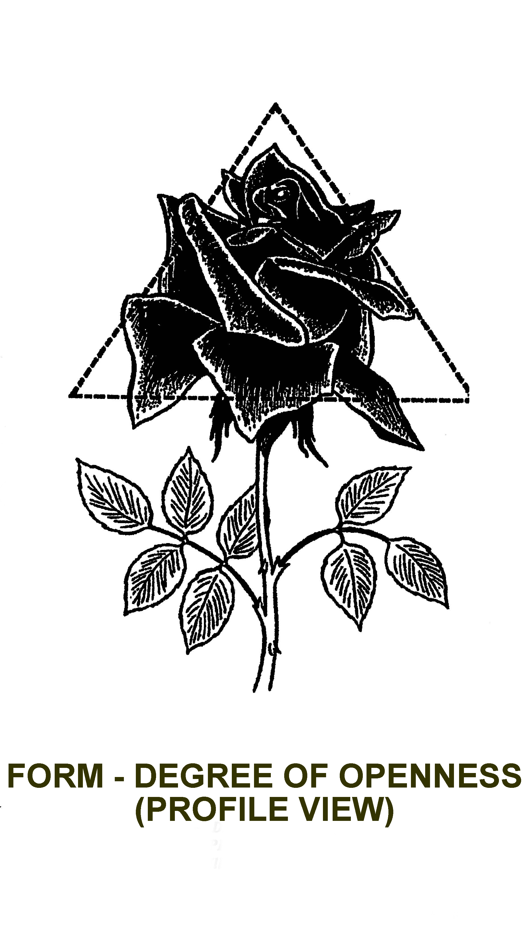 How Do Improve The Appearance Of My Rose And What