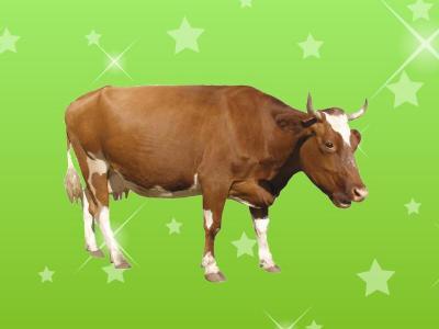 牛(牛亞科牛族動物的統稱)_百度百科