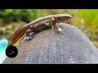 Unfiltered Pond Life - Newts and Microorganisms