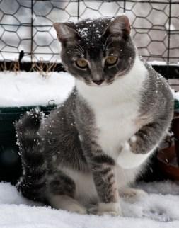 Pippen Explores Some February Snow