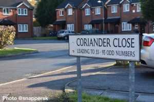 coriander2
