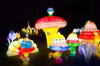 magical-lantern-festival-9