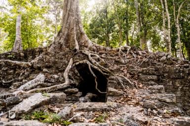 La selva y las ruinas.