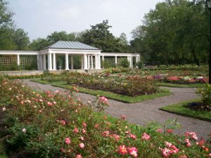 The Rose Garden in Buffalo, New York where Oouey Gooey and his wife Olga live with their 23 children...