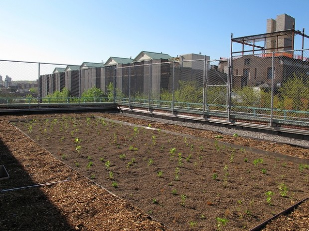 MS442's greenroof – Photo courtesy of MS442