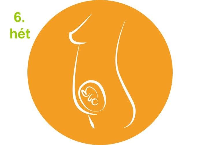 terhességi hetek - 6.hét