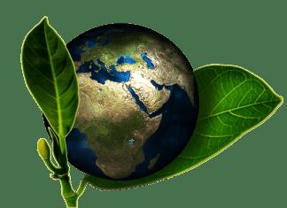 A Föld bolygó levelek között