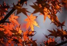Irány a szabadba! -izgalmas nyereményjáték gyerekeknek az őszi szünetben