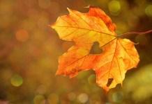 Őszi versek kicsiknek és nagyoknak