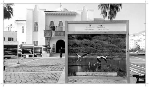 Morocco_Nador_f_29