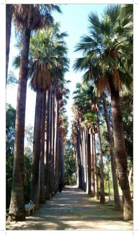 morocco_fez_jnane_sbil_garden_05