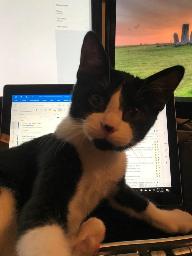 Sylvester 03