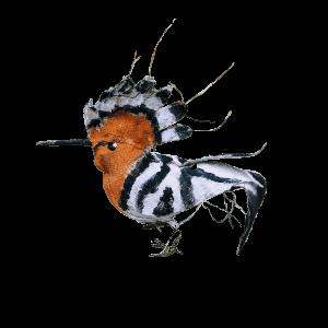 hoopoo vogel van textiel beschilderd met acryl