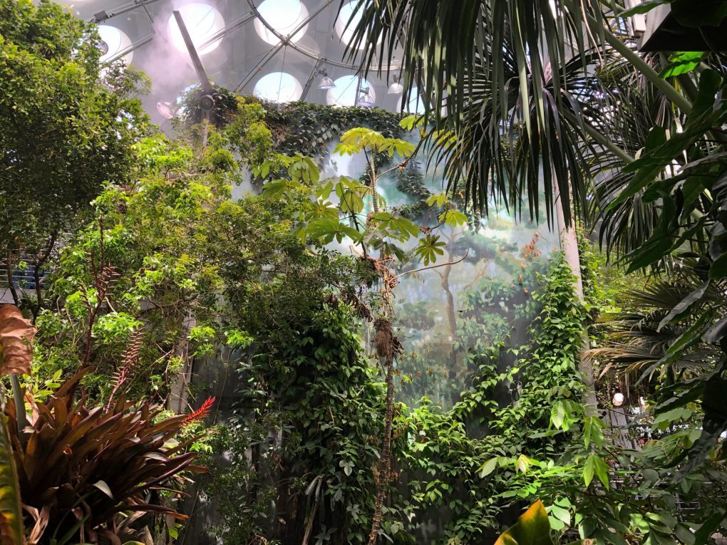 Futanari Amazon Forest