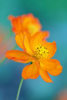 Flower photography by Bellatchitchi