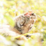 Cat-photography-Seiji-Mamiya10