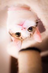 Cat-photography-Seiji-Mamiya19