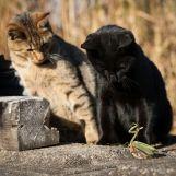 Cat-photography-Seiji-Mamiya8