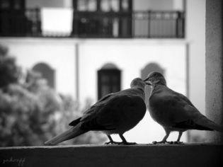 love_photos_640_04