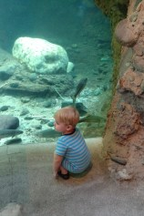Rowen and the giant fishtank