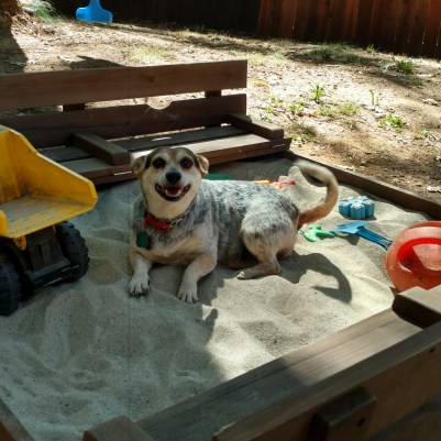 Ripley likes the sandbox too