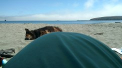 A baby bump, a dog, and the beach