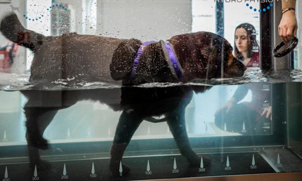 cabinet-veterinaire-physioveto-elsa-llerena-babouchkatelier- (17)