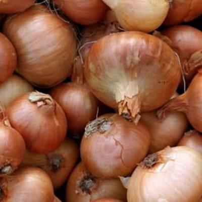mažas svogūnas riebalų praradimui)