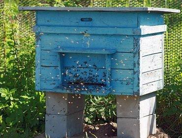 Какие бывают виды ульев для пчел фото видео конструкций