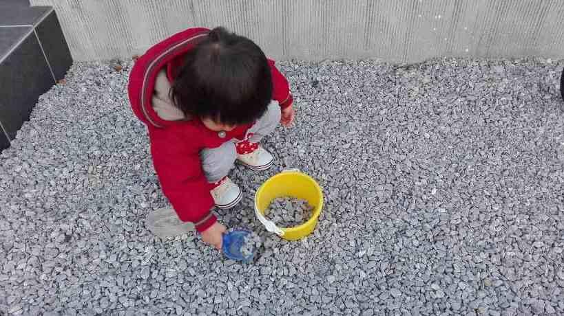 砂利で遊ぶこゆたん