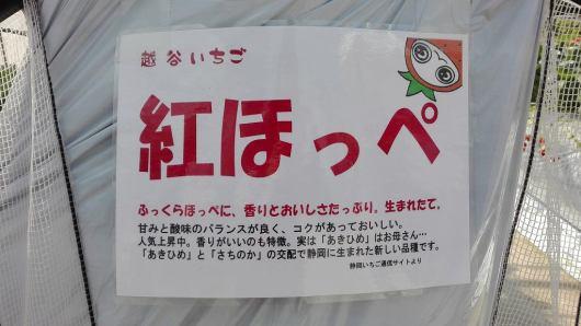 須賀農園 品種 イチゴ 紅ほっぺ