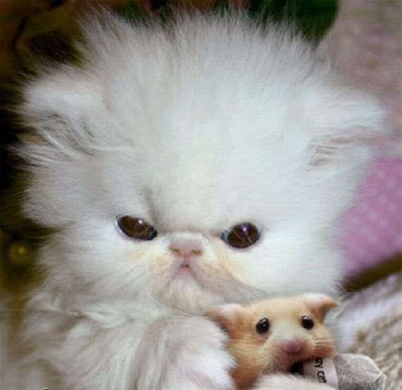 Super Cute Kitten with Hamster
