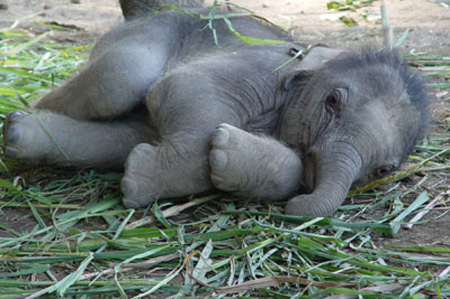 Elephants: Start Small, Grow Up Larger Than Life | Baby ...
