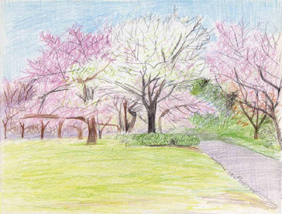 знает, картинки для рисования в саду карандашом площадкой