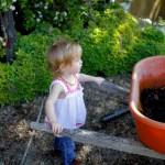Composting diapers on BabyBirdsFarm.com