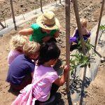Abby of Suzie's Farm shows off the tomato plants.