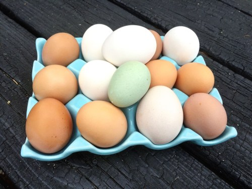 backyard eggs