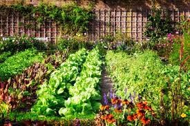 properly prepare the soil
