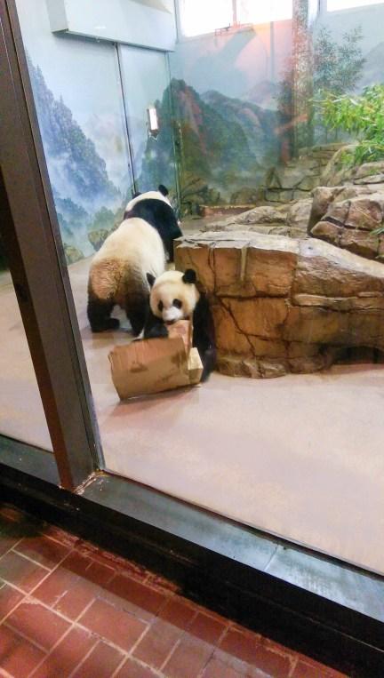 zoo-panda-washington-1-of-1