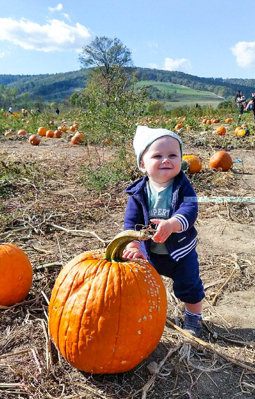 great-country-farms-pumpkin