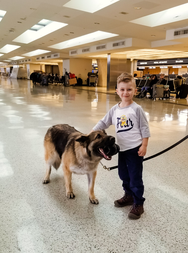 How to Plan a Birthday Party at the Airport for Your Child by popular DC mommy blog, Baby Castan on Board: image of a little boy petting a German Shepard dog.