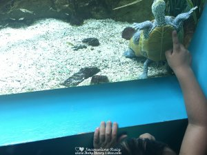Out and About in Connecticut - Maritime Aquarium - by Baby Henry Likes